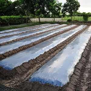 စိုက်ဘောင်ဖုံးအုပ်စိုက်ပျိုးခြင်